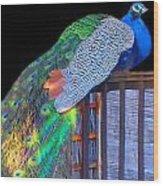 Peacock Poses Wood Print
