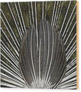 Peacock Tail Graphic Wood Print