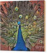 Peacock Tails Wood Print