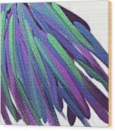 Peacock Wig Wood Print