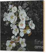 Pear Blooms And Tree Wood Print