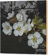 Pear Blooms Wood Print