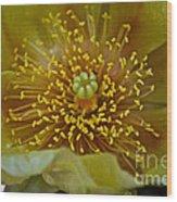 Pear Cactus Close Up Wood Print