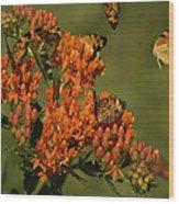 Pearly Crescentpot Butterflies Landing On Butterfly Milkweed Wood Print