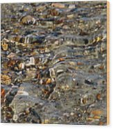Pebbles And Shells By The Sea Shore Wood Print