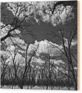 Pecan Trees Wood Print