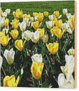 Peddler's Tulip 2012 3 Wood Print