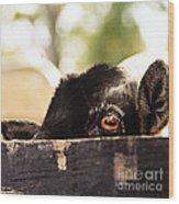 Peek-a-boo Wood Print