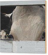 Peek-a-boo Cow Wood Print