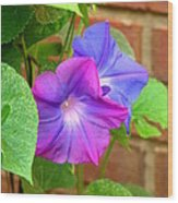 Peek-a-boo Morning Glories Wood Print