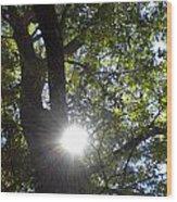 Peek A Boo Sunshine Wood Print