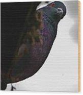 Peeking Pigeon Wood Print by DigiArt Diaries by Vicky B Fuller