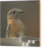 Peeping Bluebird Wood Print