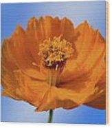 Pefect In Orange Wood Print
