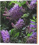 Peggy's Whisteria Wood Print