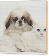 Pekinese Puppy And Maine Coon-cross Wood Print
