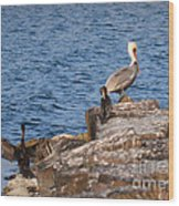 Pelican And Cormorants Wood Print