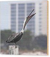 Pelican Attitude Wood Print