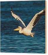 Pelican Brief Wood Print