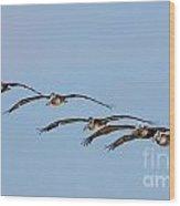 Pelican Crew In Flight Wood Print