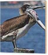 Pelican I Wood Print