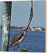 Pelican IIi Wood Print