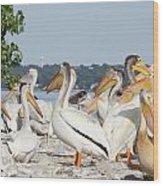 Pelican Island Wood Print