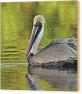 Pelican On A Golden Pond Wood Print