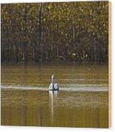 Pelican On Golden Pond Wood Print