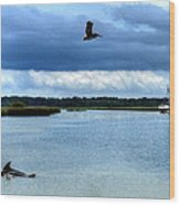 Pelican Porpoise And Pirate Ship Wood Print