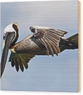 Pelican Prepares To Dive Wood Print