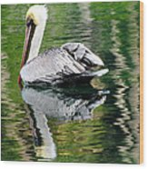 Pelican Reflecting Wood Print