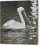 Pelican Solo Wood Print