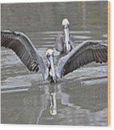 Pelican Span Wood Print