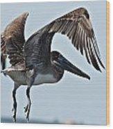 Pelican V Wood Print