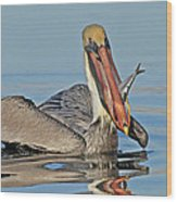 Pelican With Catch Wood Print