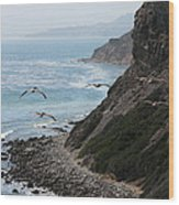 Pelicans Colony Flying Over Cliff Wood Print