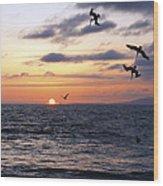 Pelicans Diving At Sunset Wood Print