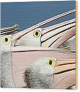 Pelicans (eyes Have It) Wood Print by An Gobán Saor