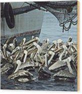 Pelicans Float In Water Near A Shrimp Wood Print