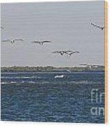 Pelicans In Line Wood Print