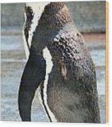 Penguin 13 Wood Print