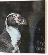 Penguin Splash Wood Print