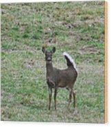 Pennsylvania White Tail Deer Wood Print