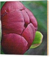 Peony Bud Wood Print
