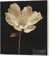 Peony Flower Portrait Sepia Wood Print