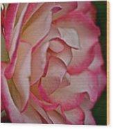Peppermint Rose Wood Print