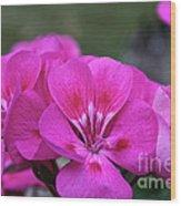 Pepto Pink Wood Print
