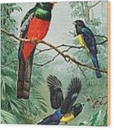 Perched And Flying Trogons Are Seen Wood Print