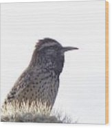 Perched On A Cactus Wood Print